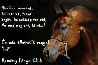 lovas idézetek képekkel lovas idézetek